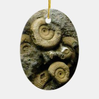 Ornamento De Cerâmica círculos de caracóis fósseis