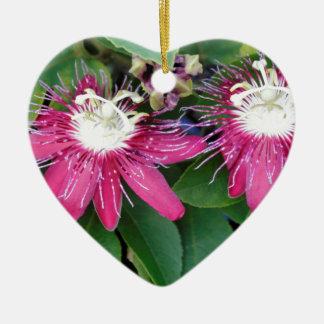 Ornamento De Cerâmica Close up vermelho de duas flores da paixão fora na