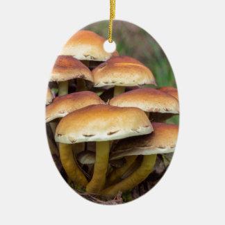 Ornamento De Cerâmica Cogumelos marrons do grupo na floresta da queda