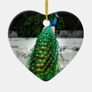 Ornamento De Cerâmica cores bonitas da arte da pena do pavão
