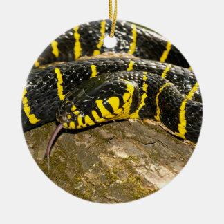 Ornamento De Cerâmica Dendrophila de Boiga ou cobra dos manguezais