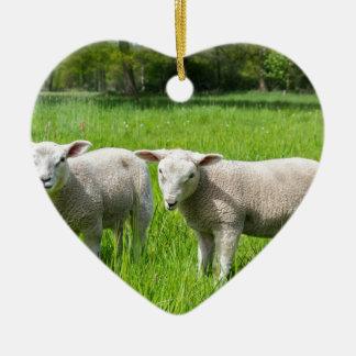 Ornamento De Cerâmica Dois carneiros holandeses brancos no prado verde
