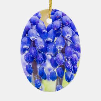 Ornamento De Cerâmica Dois jacintos de uva azuis no primavera