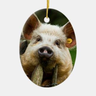 Ornamento De Cerâmica Dois porcos - fazenda de porco - fazendas da carne