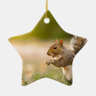 Ornamento De Cerâmica Esquilo com fome