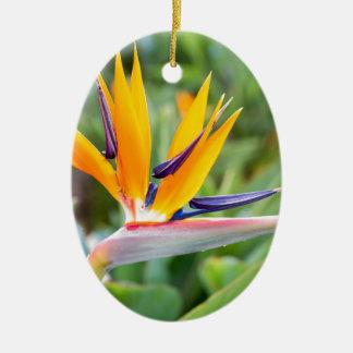 Ornamento De Cerâmica Feche acima da flor do guindaste ou do reginaei do