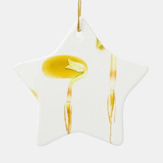 Ornamento De Cerâmica Feijão da germinação do ciclo de vida no branco