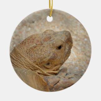 Ornamento De Cerâmica fim da cabeça da tartaruga acima da tartaruga