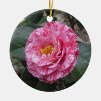 Ornamento De Cerâmica Flor branca listada vermelho do japonica da