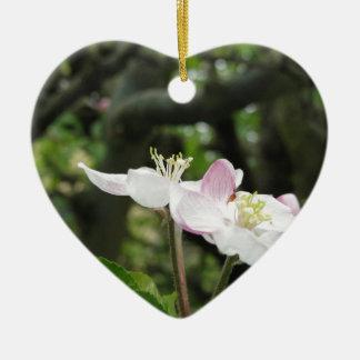 Ornamento De Cerâmica Flor cor-de-rosa da maçã no primavera. Toscânia,