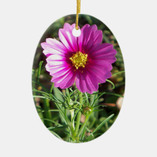 Ornamento De Cerâmica Flor cor-de-rosa escura da margarida do cosmos