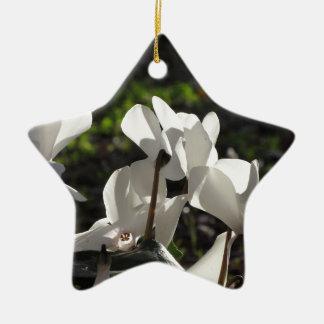 Ornamento De Cerâmica Flores brancas do cyclamen de Backlits no fundo