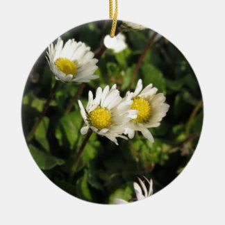 Ornamento De Cerâmica Flores da margarida branca no fundo verde