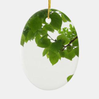 Ornamento De Cerâmica Folhas do verde da árvore de caqui no fundo branco