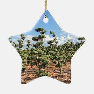 Ornamento De Cerâmica Formas bonitas do topiary nas coníferas