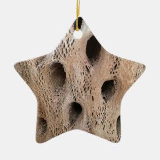 Ornamento De Cerâmica Foto do esqueleto de Cholla