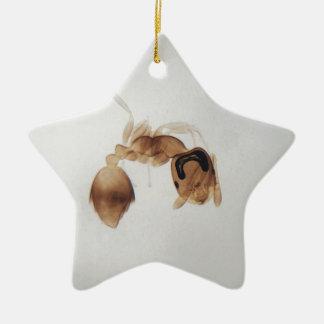 Ornamento De Cerâmica Foto do microscópio de uma formiga