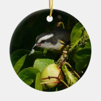 Ornamento De Cerâmica Fotografia tropical da natureza comer do pássaro