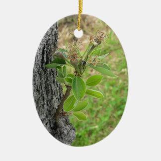 Ornamento De Cerâmica Galho da árvore de pera com os botões no primavera