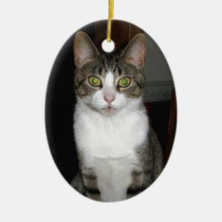 Ornamento De Cerâmica Gato de gato malhado com os olhos verdes grandes