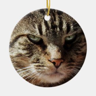 Ornamento De Cerâmica Gato de gato malhado Crabby engraçado