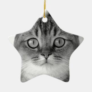 Ornamento De Cerâmica Gato preto e branco que olha reto em você