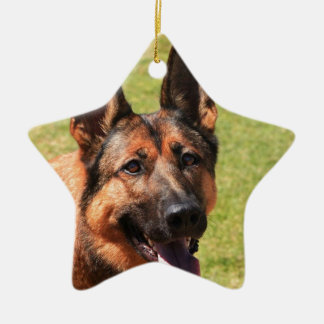 Ornamento De Cerâmica German shepherd de Malinois do belga