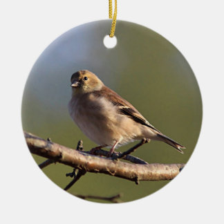 Ornamento De Cerâmica Goldfinch americano na plumagem do inverno
