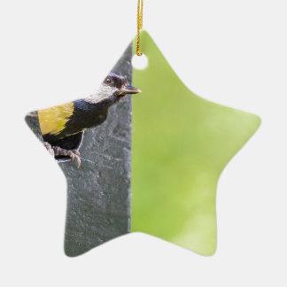 Ornamento De Cerâmica Grande pai do melharuco no furo da caixa-ninha