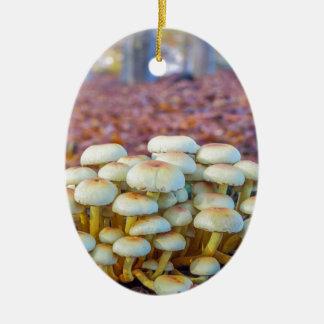 Ornamento De Cerâmica Grupo de cogumelos na floresta da faia da queda