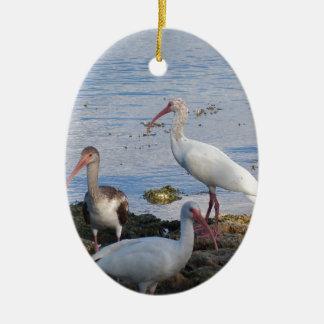 Ornamento De Cerâmica Íbis 3 na costa da baía de Florida
