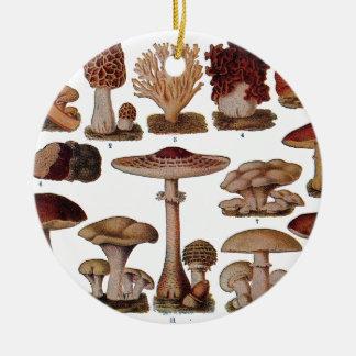 Ornamento De Cerâmica Impressão botânico da família do cogumelo do