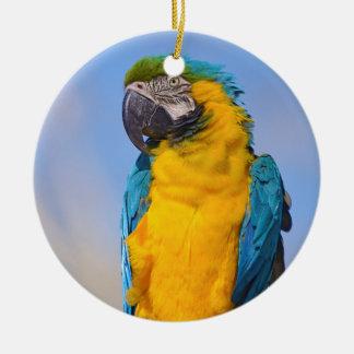 Ornamento De Cerâmica Macaw de Gelbbrustara na vara