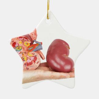 Ornamento De Cerâmica Mão lisa que mostra o rim humano modelo