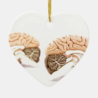 Ornamento De Cerâmica Modelo dos cérebros humanos isolado no fundo
