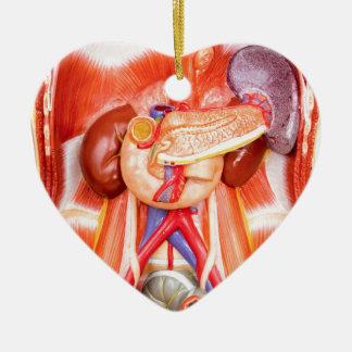 Ornamento De Cerâmica Modelo humano do torso com órgãos