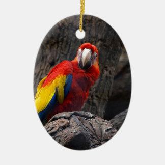 Ornamento De Cerâmica O Ara do animal de estimação de Papużka do pássaro