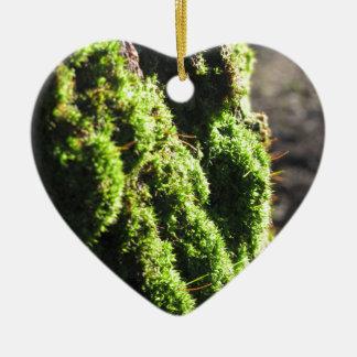 Ornamento De Cerâmica O musgo verde no detalhe da natureza de musgo