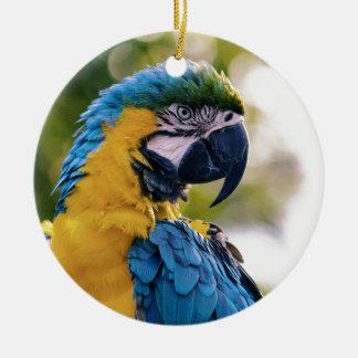 Ornamento De Cerâmica O papagaio