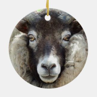 Ornamento De Cerâmica Os carneiros escoceses fecham-se acima