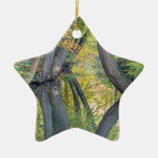 Ornamento De Cerâmica Os troncos de árvore da queda com reflexão na