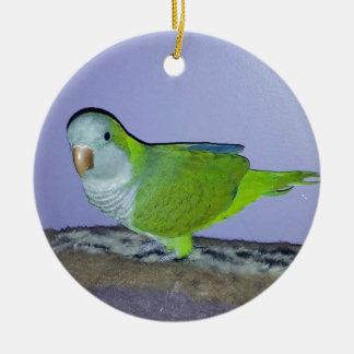 Ornamento De Cerâmica Papagaio do quacre