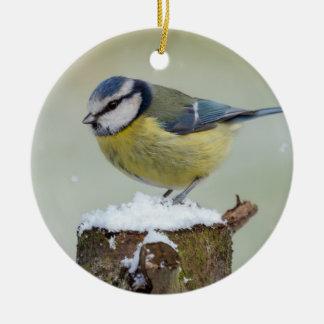 Ornamento De Cerâmica Pássaro selvagem impressionante do melharuco azul