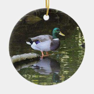 Ornamento De Cerâmica Pato do pato selvagem