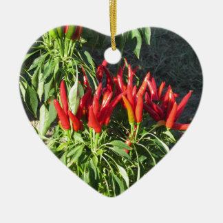 Ornamento De Cerâmica Pimentas vermelhas que penduram na planta.