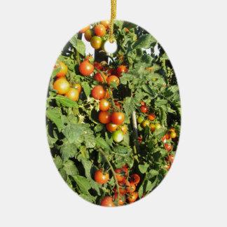 Ornamento De Cerâmica Plantas de tomate que crescem no jardim