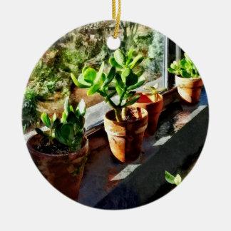 Ornamento De Cerâmica Plantas do jade na estufa
