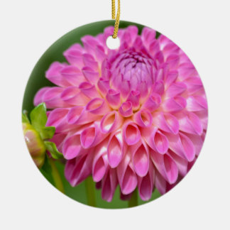 Ornamento De Cerâmica Poster cor-de-rosa beneficiente da dália e do