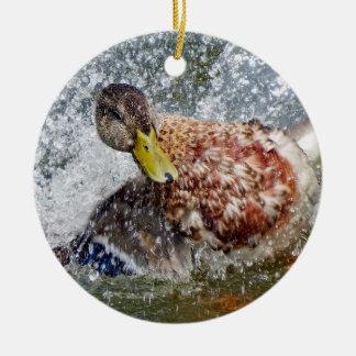 Ornamento De Cerâmica Respingo de Splish do pato da galinha do pato