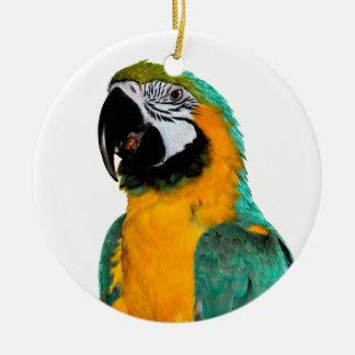 Ornamento De Cerâmica retrato colorido do pássaro do papagaio do macaw